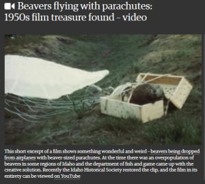 Flying Beavers 2